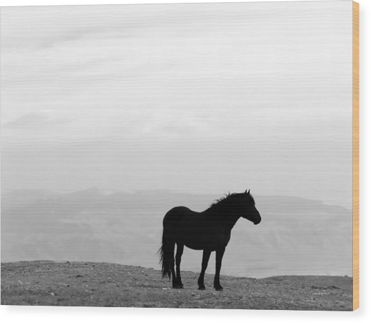 Wild Horse Silhouette Bw Wood Print by Leland D Howard