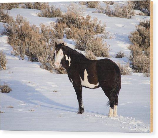 Wild Horse Stallion Wood Print