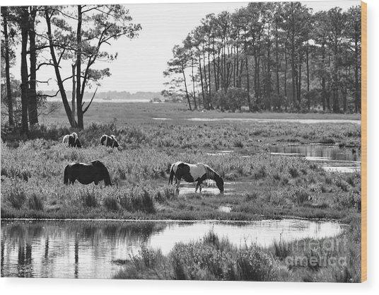 Wild Horses Of Assateague Feeding Wood Print