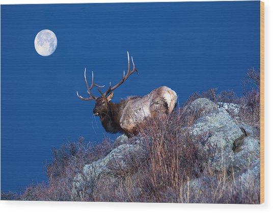 Wild Moon Wood Print