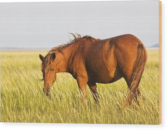 Wild Mustand On The Tidal Flats Wood Print