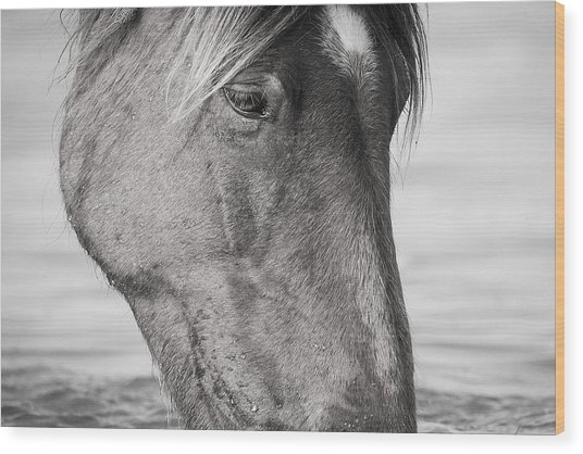 Wild Mustang Feeding Wood Print