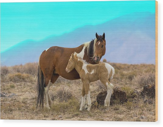 Wild Mustang Horses In The West Desert Wood Print by Don Cook