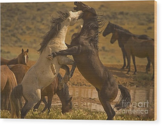 Wild Mustang Stallions - Signed Wood Print