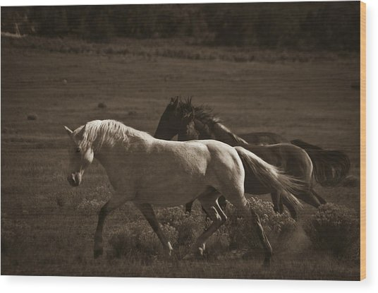 Wild Mustangs Of New Mexico 10 Wood Print