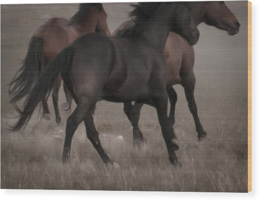 Wild Mustangs Of New Mexico 16 Wood Print