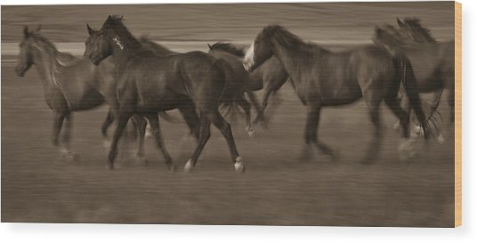 Wild Mustangs Of New Mexico 17 Wood Print