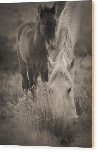 Wild Mustangs Of New Mexico 19 Wood Print