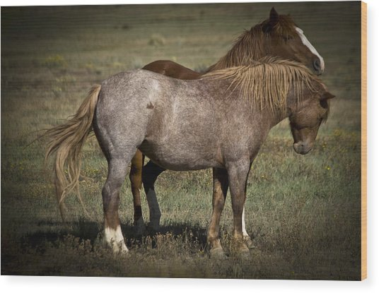 Wild Mustangs Of New Mexico 2 Wood Print