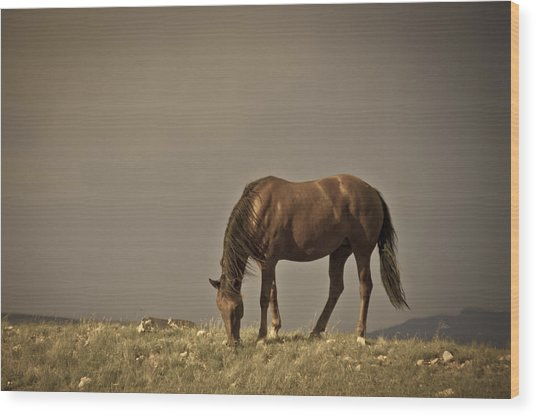 Wild Mustangs Of New Mexico 20 Wood Print