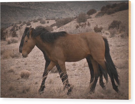 Wild Mustangs Of New Mexico 23 Wood Print