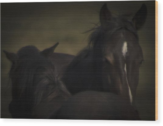 Wild Mustangs Of New Mexico 25 Wood Print