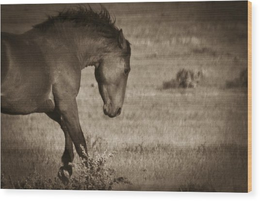 Wild Mustangs Of New Mexico 31 Wood Print