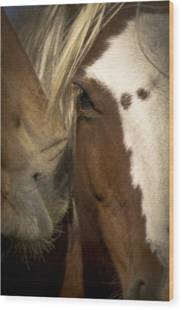 Wild Mustangs Of New Mexico 32 Wood Print