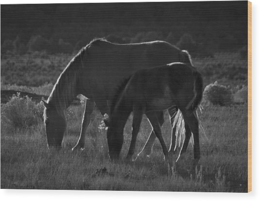 Wild Mustangs Of New Mexico 7 Wood Print