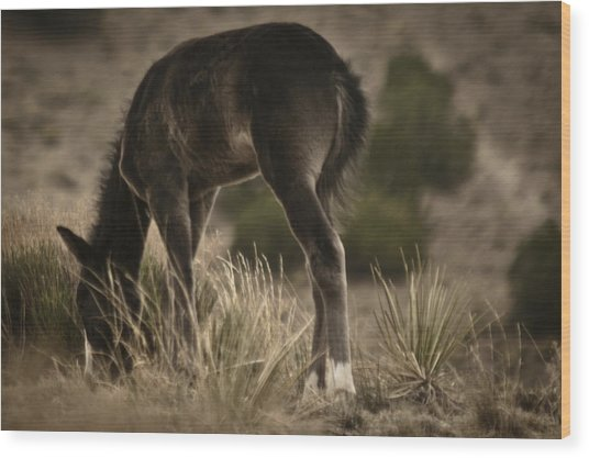 Wild Mustangs Of New Mexico 8 Wood Print