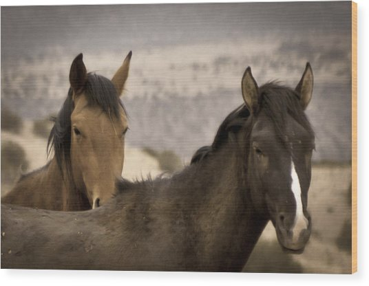 Wild Mustangs Of New Mexico Wood Print