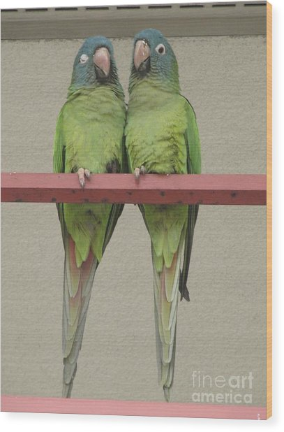 Wild Parrots Wood Print