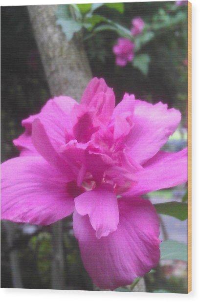Wild Pink Rose Wood Print by Kim Martin