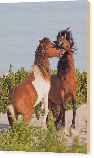 Wild Ponies At Play Wood Print