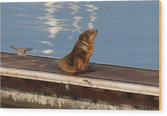 Wild Pup Sun Bathing Wood Print