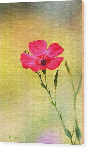 Wild Red Flower Wood Print