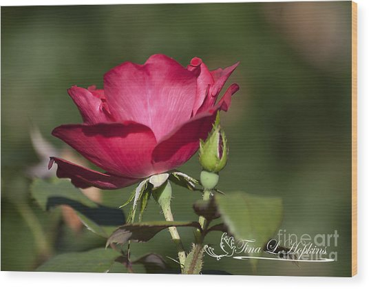 Wild Rose 20120615_205a Wood Print