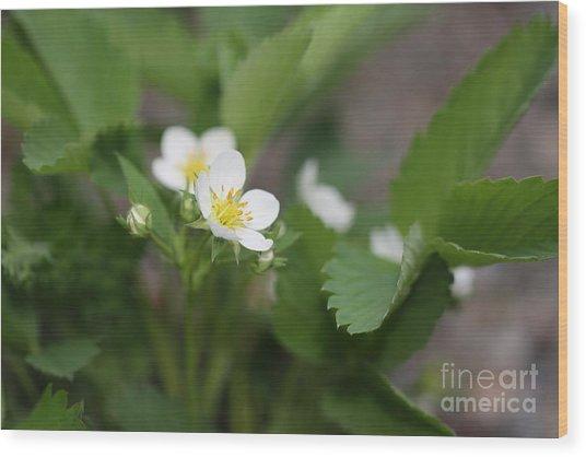 Wild Strawberry Flower Wood Print