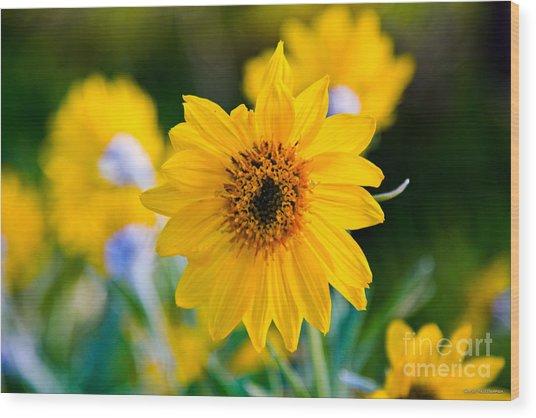 Wild Sunflower Wood Print by Chris Heitstuman