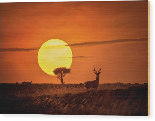 Wild Sunrise Wood Print