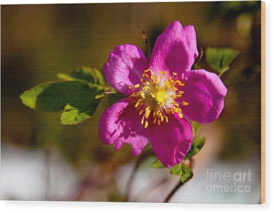 Wild Tundra Rose Wood Print