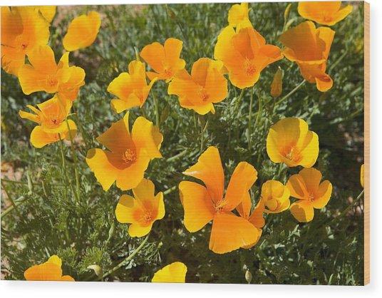 Wild Yellow Poppy Cluster Wood Print