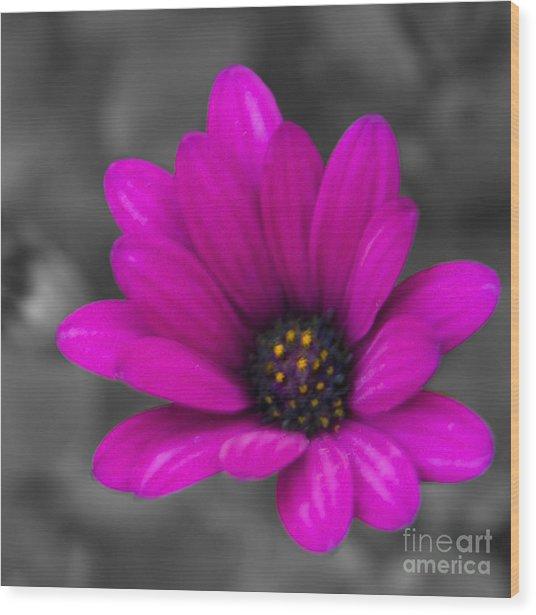 Wildflower 1 Wood Print by Jacquelinemari