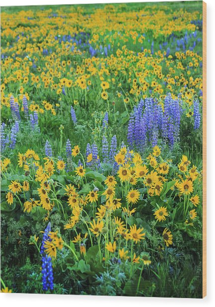 Wood Print featuring the photograph Wildflower Bounty by Jon Ares