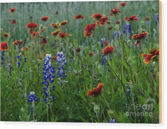 Wildflower Delight Wood Print by Cathy Alba