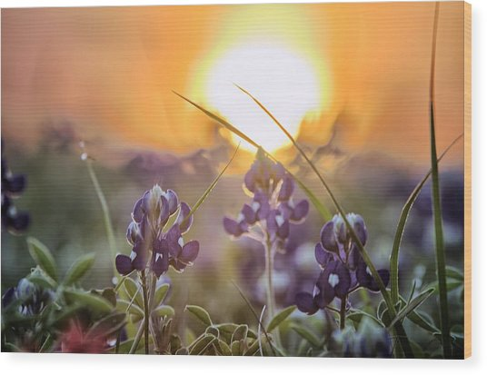 Wildflower Glow Wood Print