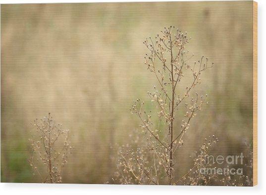 Wildflower Wood Print by Jolanta Meskauskiene