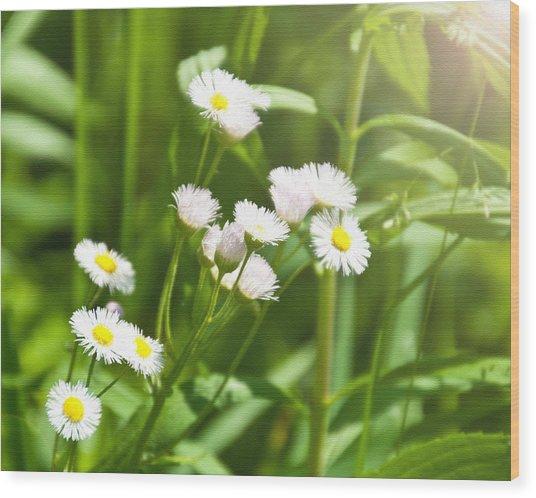 Wildflower Wood Print by Kellie Prowse