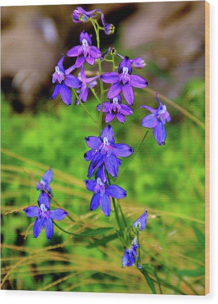 Wildflower Larkspur Wood Print