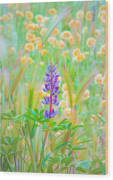 Wildflower Meadow - Spring In Central California Wood Print