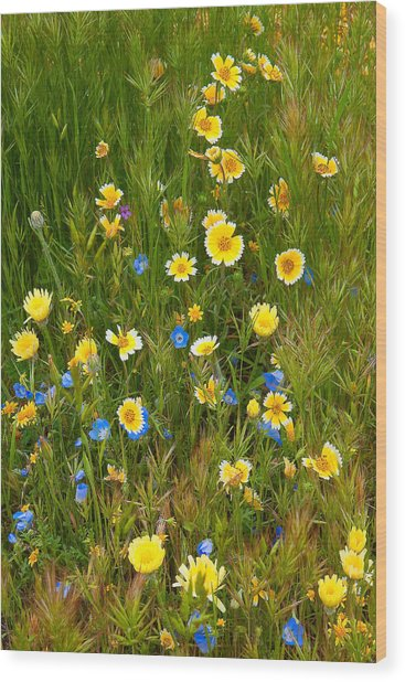 Wildflower Salad - Spring In Central California Wood Print