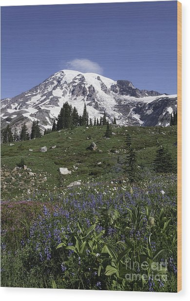 Wildflower Season At Mt Rainier Wood Print