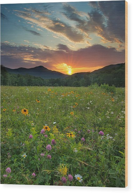 Wildflower Sunset Wood Print