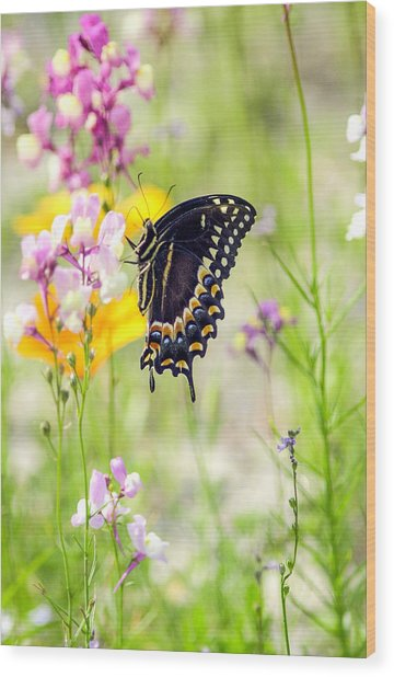 Wildflowers And Butterfly Wood Print by Bill LITTELL