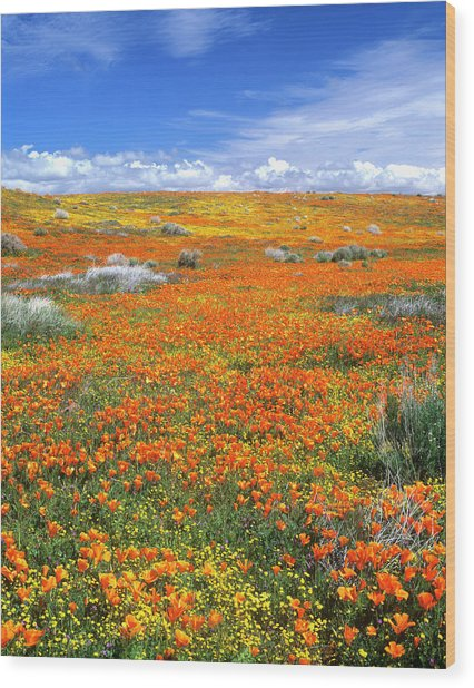 Wildflowers At The California Poppy Wood Print by John Alves