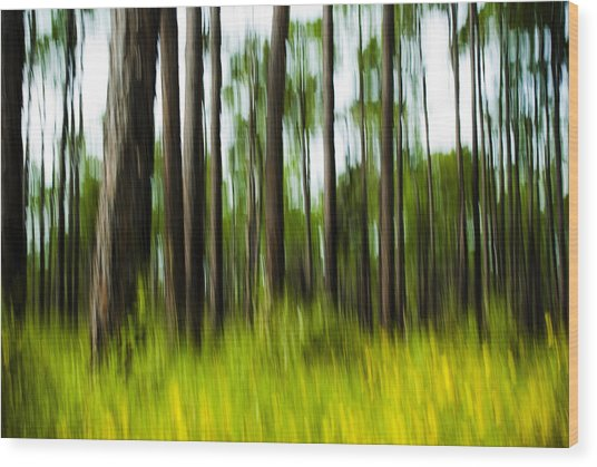 Wildflowers In The Forest Wood Print
