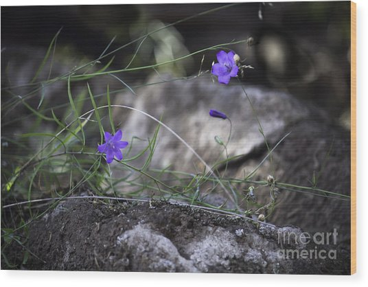 Wildflowers On Rocks Wood Print