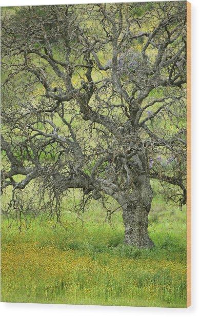 Wildflowers Under Oak Tree - Spring In Central California Wood Print