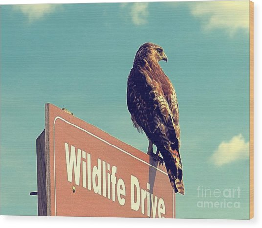 Wildlife Drive Greeter Wood Print