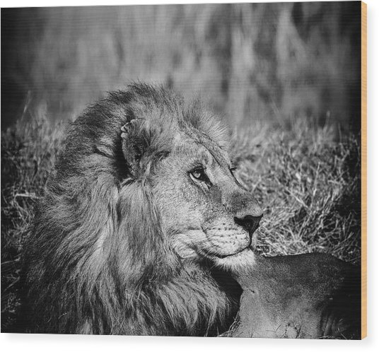 Wood Print featuring the photograph Wildlife Lion by Gigi Ebert
